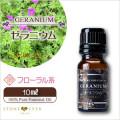 人気No.6 ゼラニウム